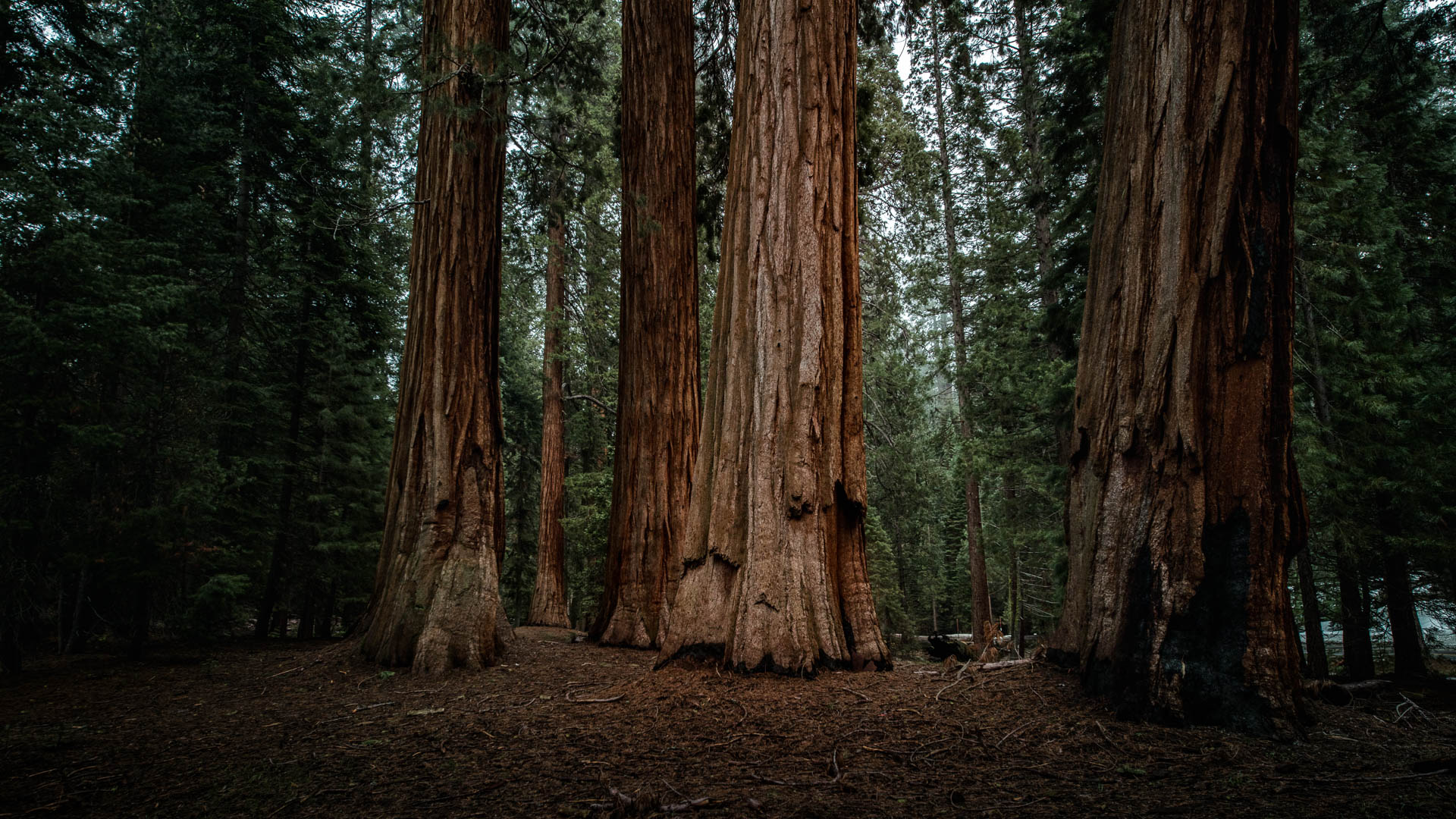 LDKphoto - Sequoia -18.jpg