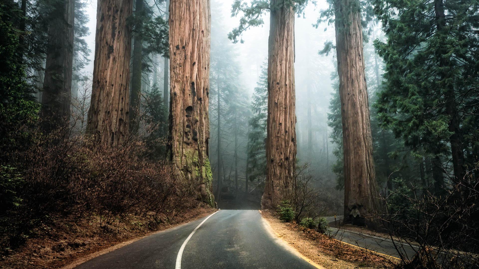 LDKphoto - Sequoia -19.jpg