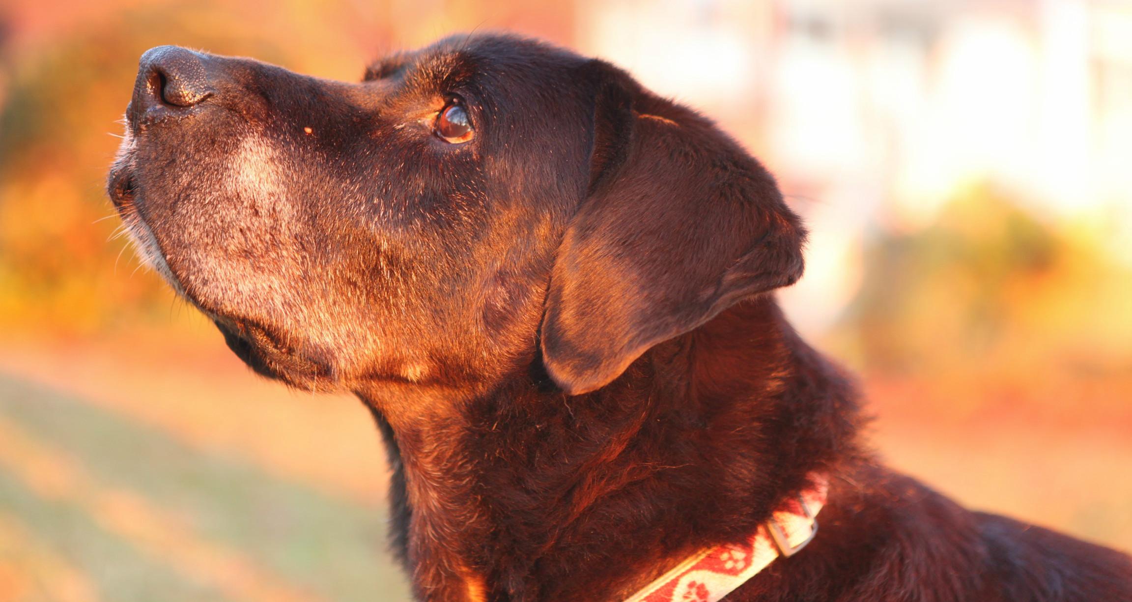 pet-euthanasia-at-home-wilmington-nc.JPG