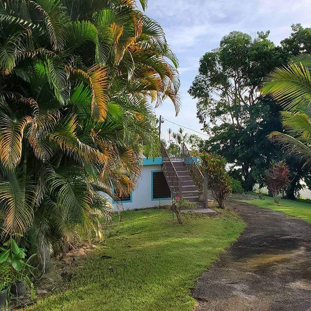 Future home of Goat Maid's Farm😍  #goatmaidsfarm #goatmaidsoap #puertorico #utuado #islandlife #goats