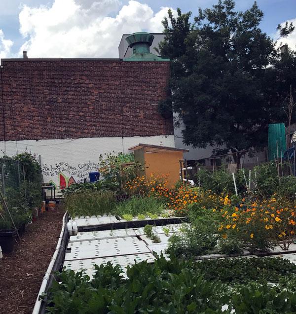 rooftop-garden-5.jpg
