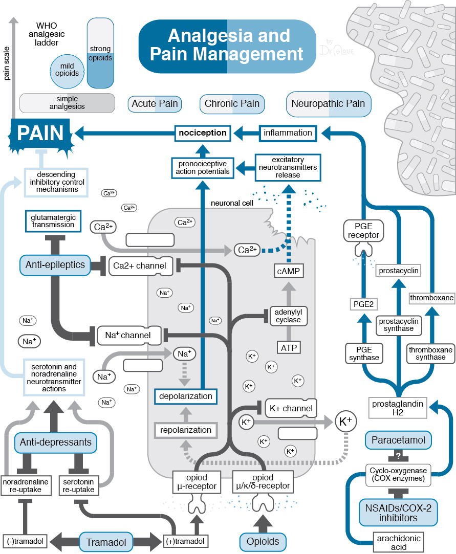 Analgesia and Pain Management.jpg