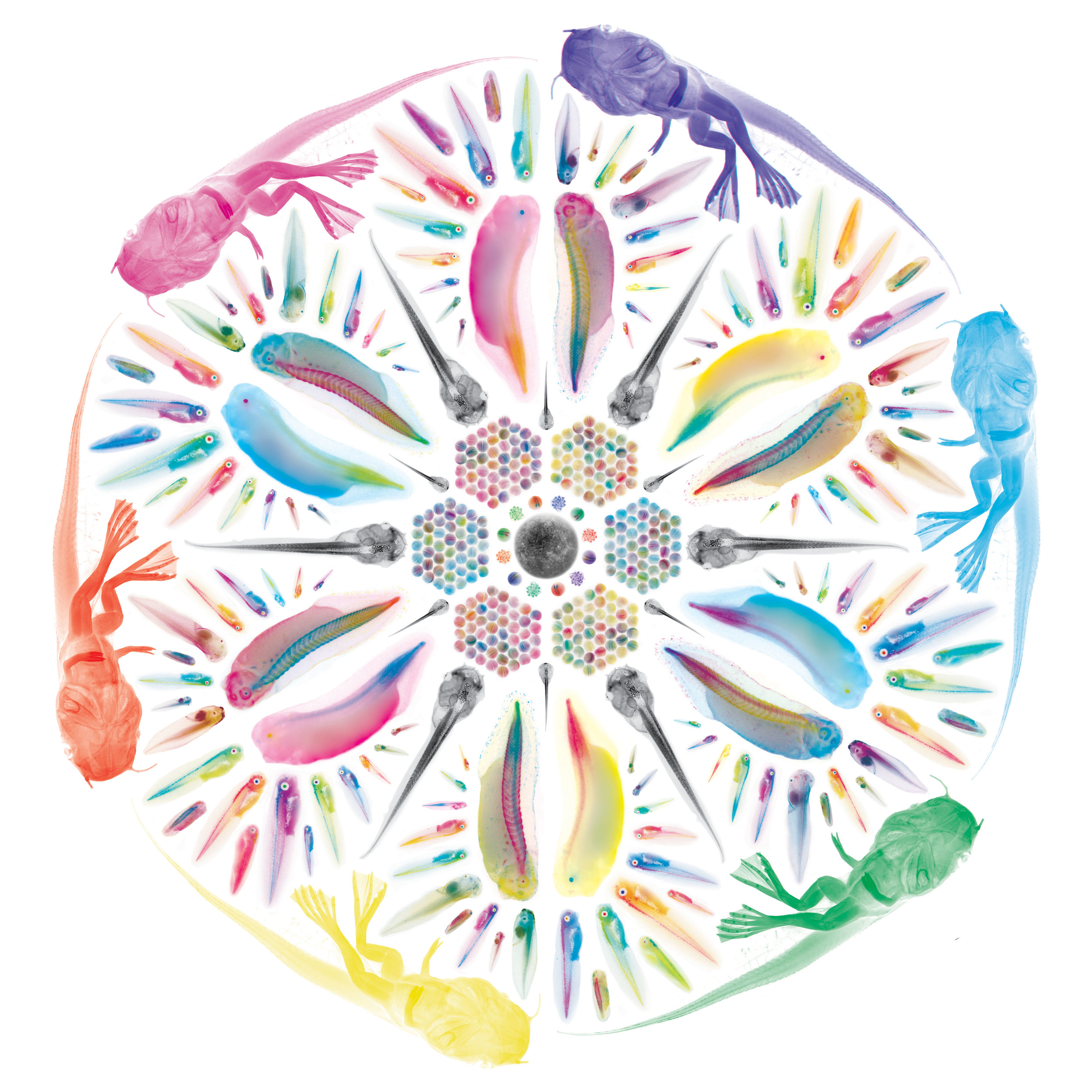 tadpole mandala RGB.jpg