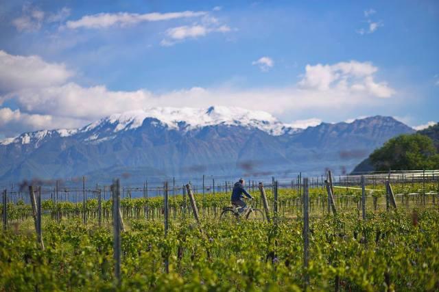 vineyard-mountains.jpg