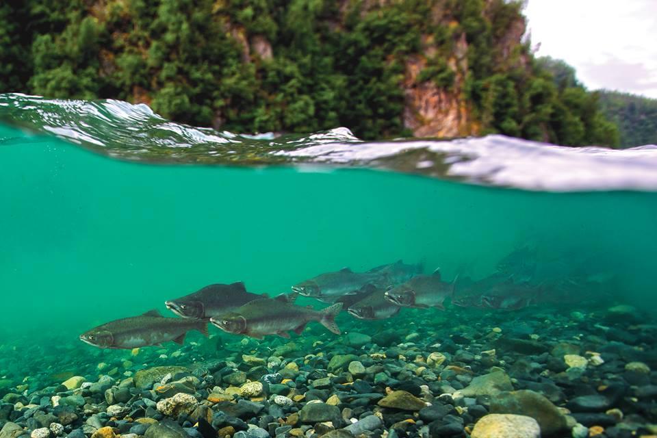 film: Super Salmon