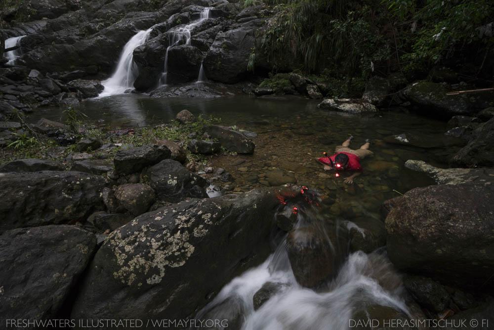 FreshwatersIllustrated_Luquillo-8.jpg
