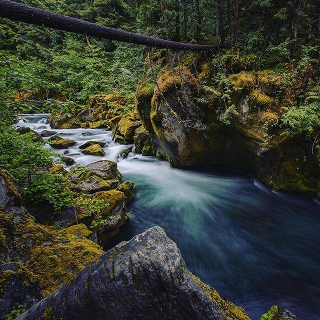 August, Rogue River_, Shane Stiles.jpg