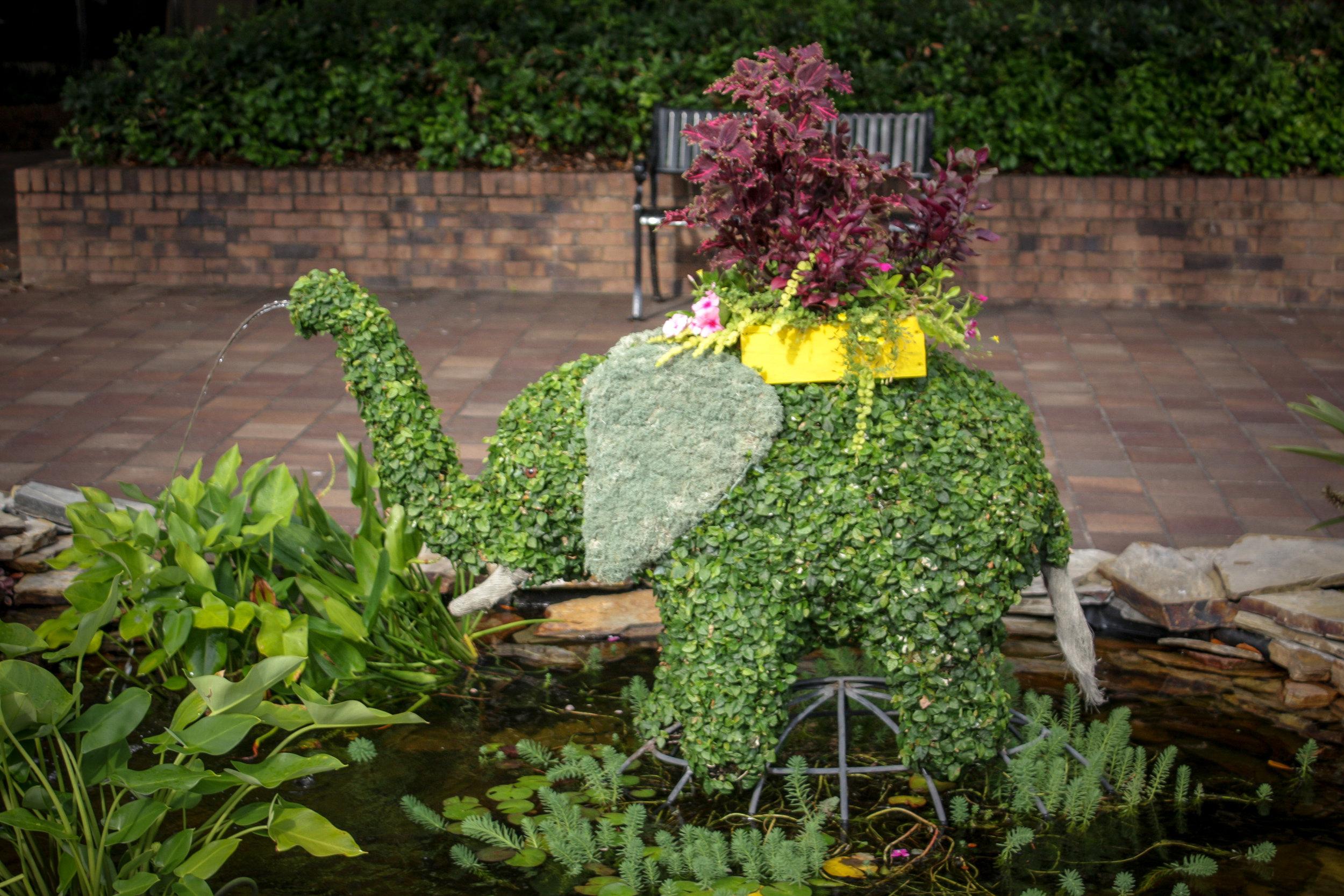 Horton, Baby Elephant
