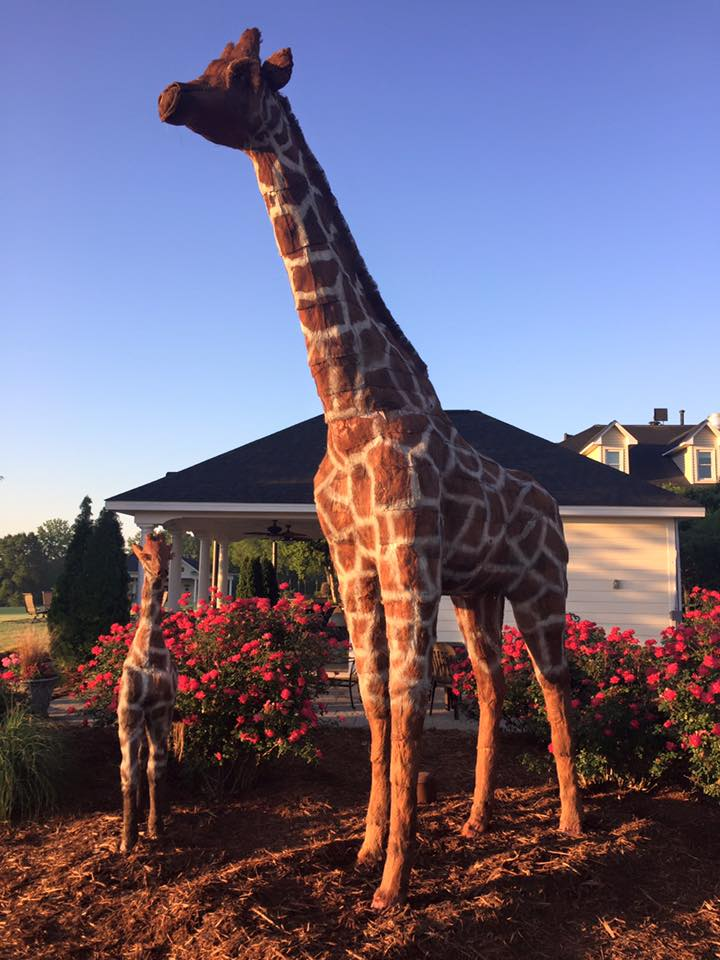Gertie and Gidget, Mama & Baby Giraffes