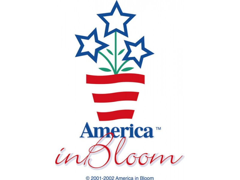 American in Bloom