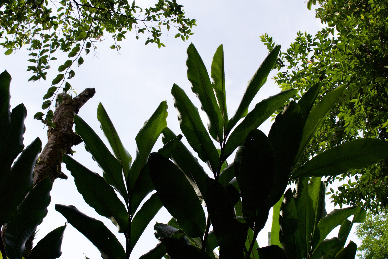 Throwing shade naturally.