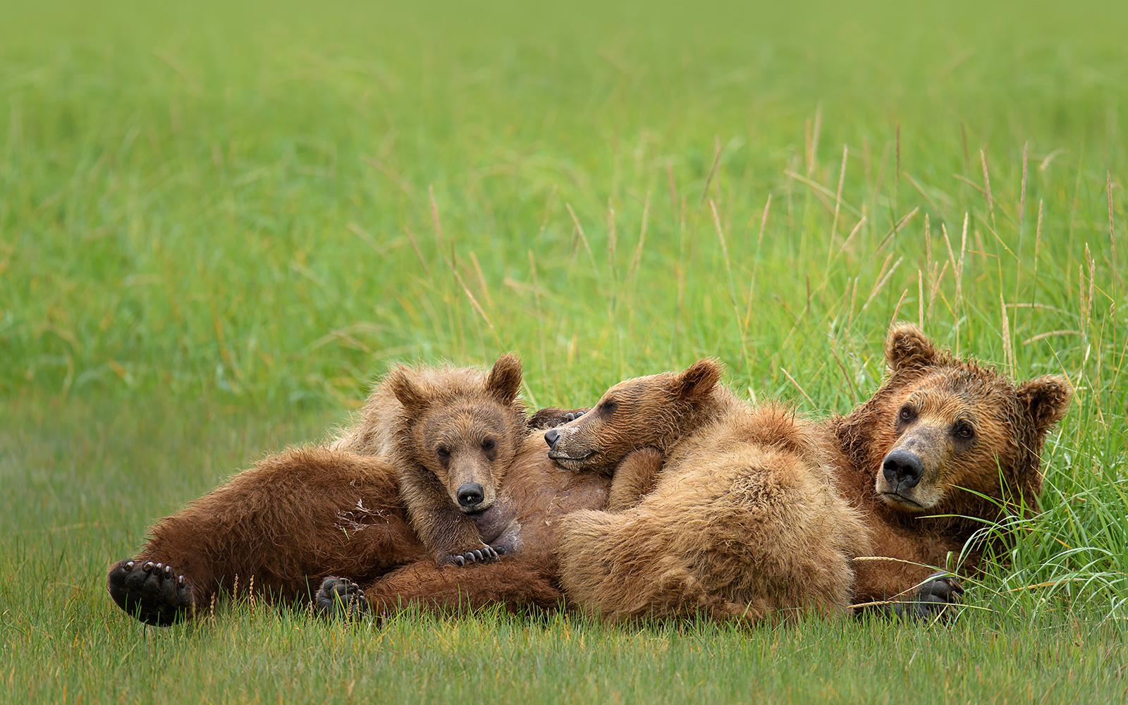 BearsB.JPG