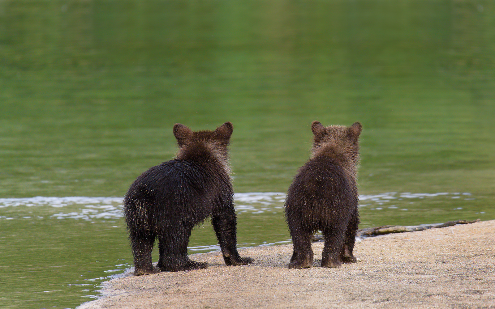 bearsH.JPG