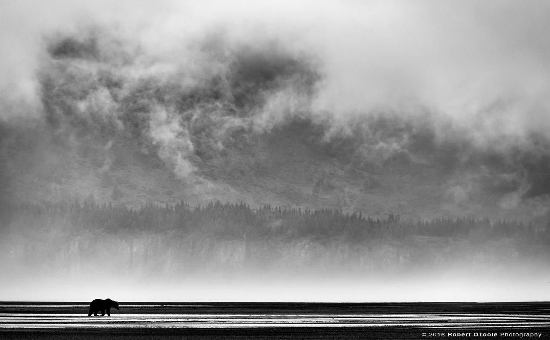 Brown Bear Hallo Bay Mist and Clouds in Alaska