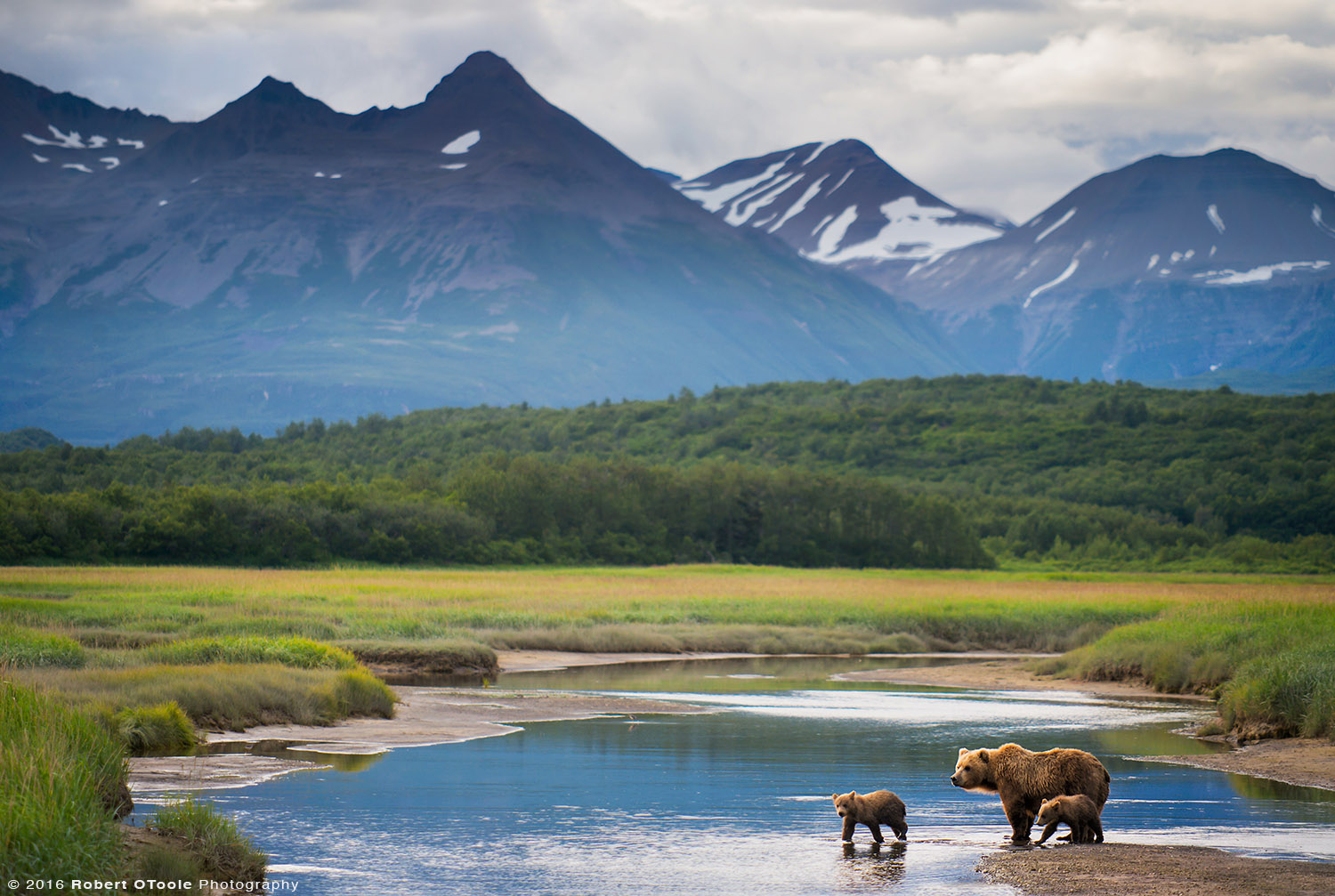 Mother Bear with Cubs with Mountains in the Background