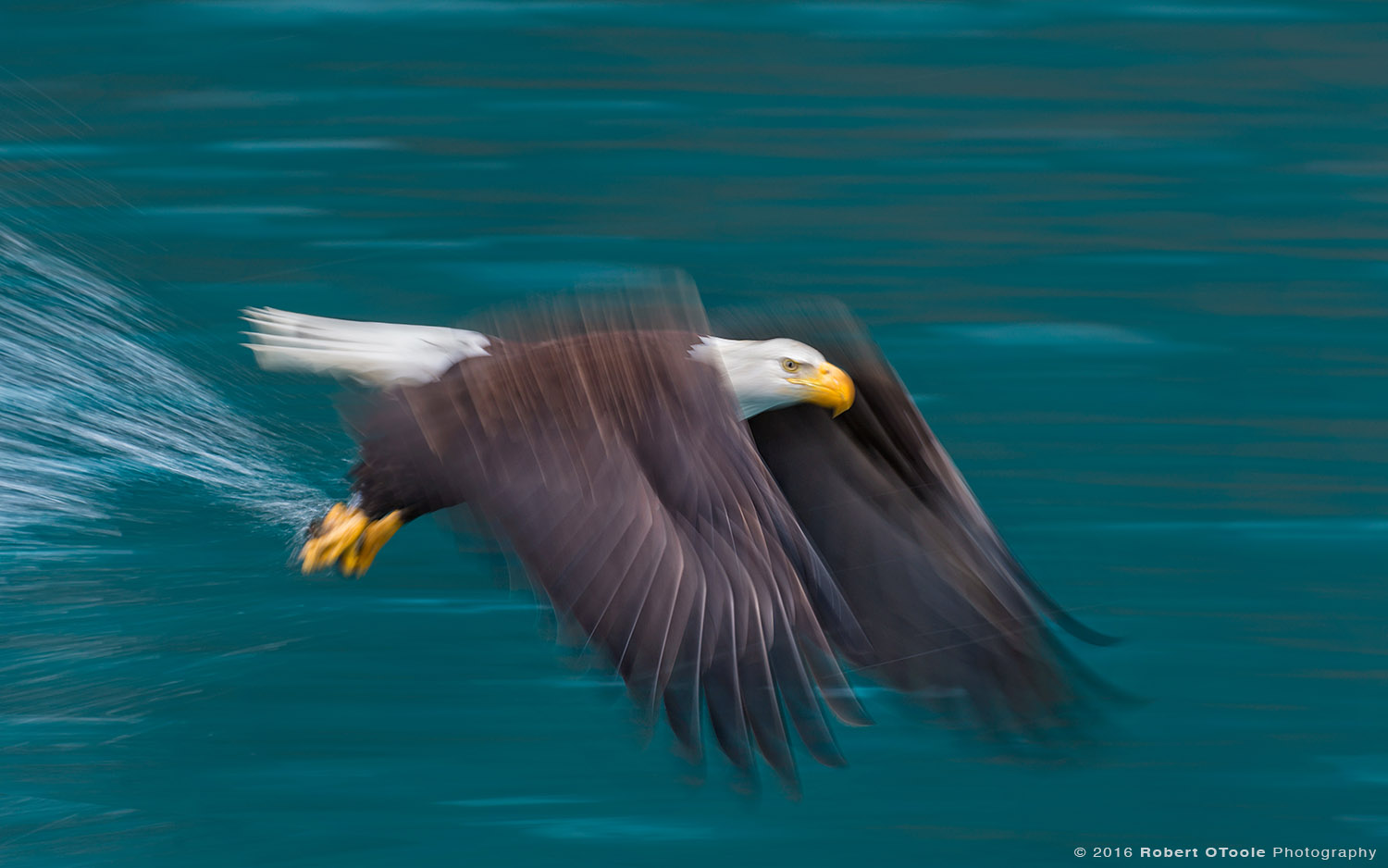 Bald Eagle Flying against Jade Green Water at 1/40th s