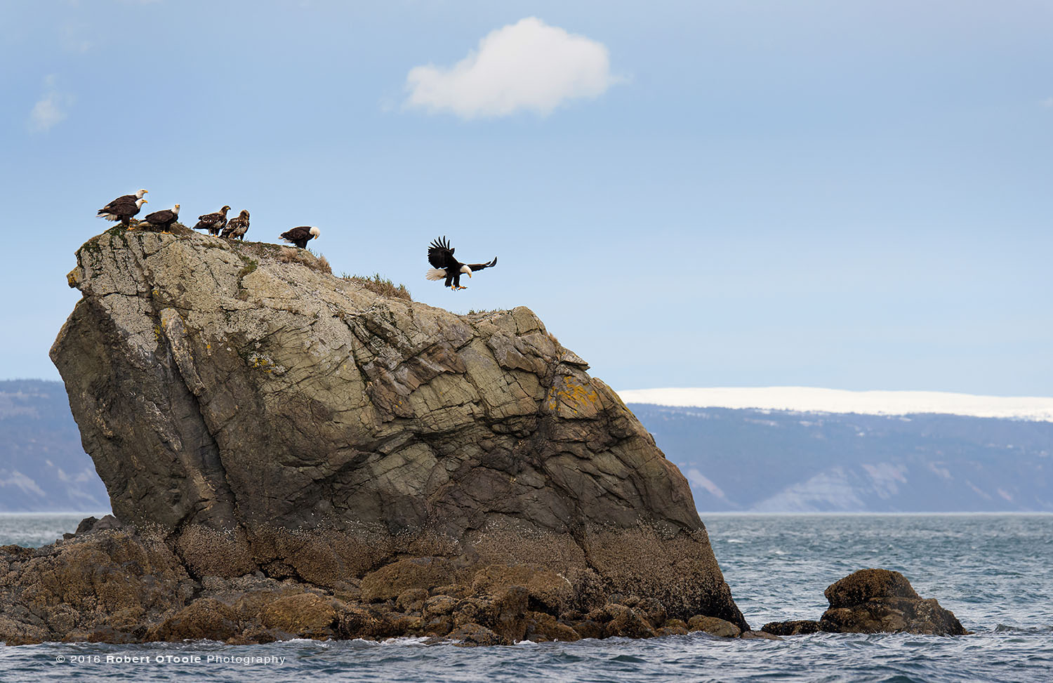 Bald Eagles on the Rock