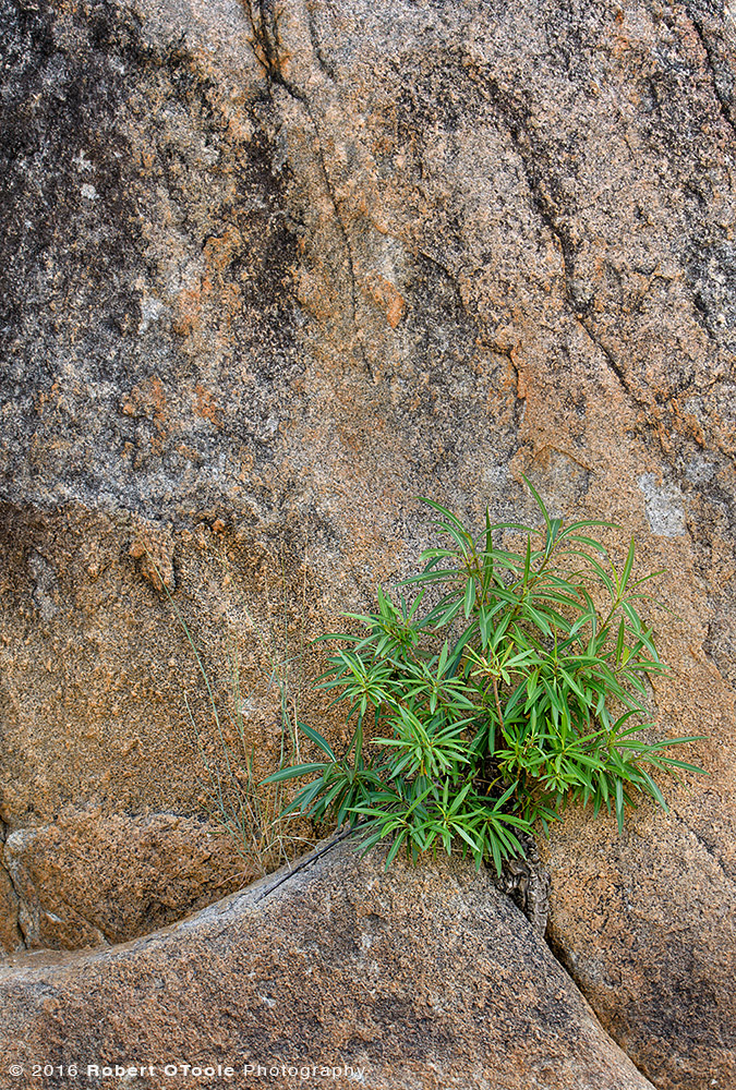 Plant on Rock in  South Africa