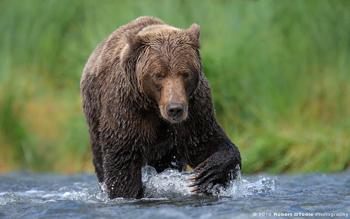 Creek-crossing-Alaska-August