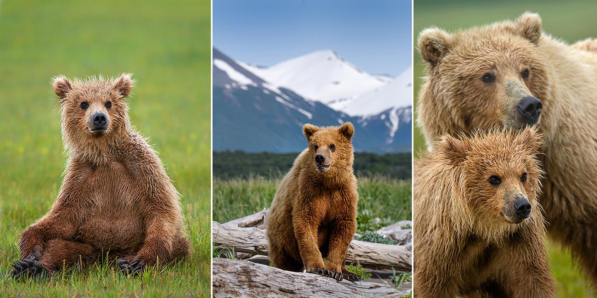 Cubs-Katmai-Alaska-Robert-OToole-Photography-2016