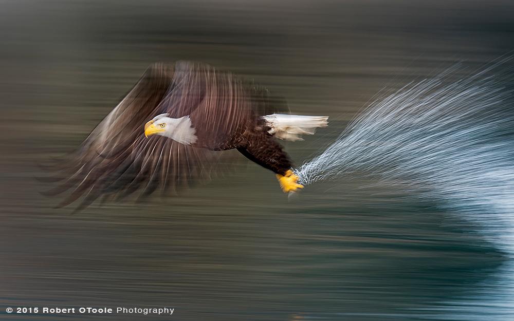Eagle-1-20s-sec-speed-blur-Robert-OToole-Photography-2015