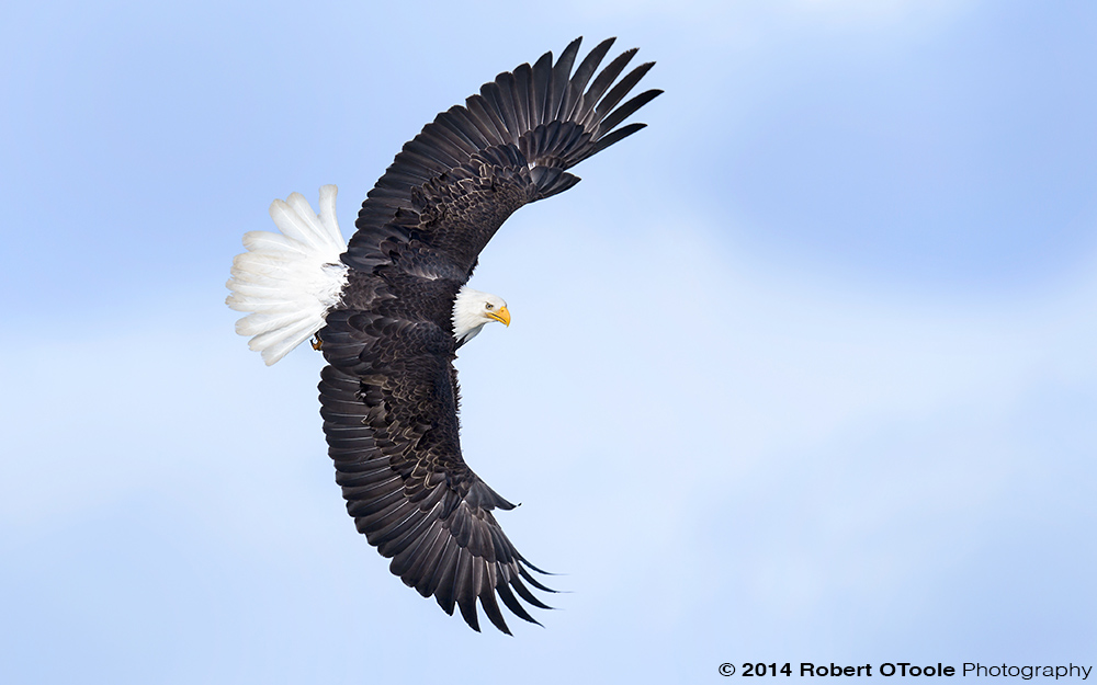 Eagle-Bank-full-spread-Robert-OToole-Photography