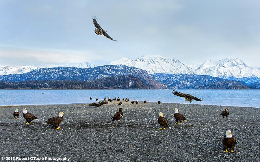 Eagle-gravel-bar-2013-Robert-OToole-Photography