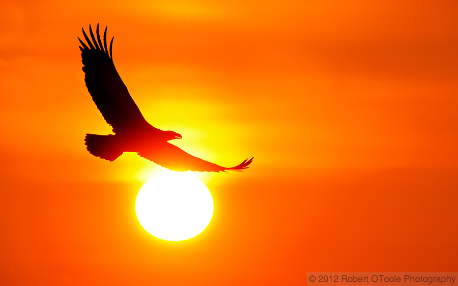 bald-eagle-and-sun-ball-robert-otoole-photography