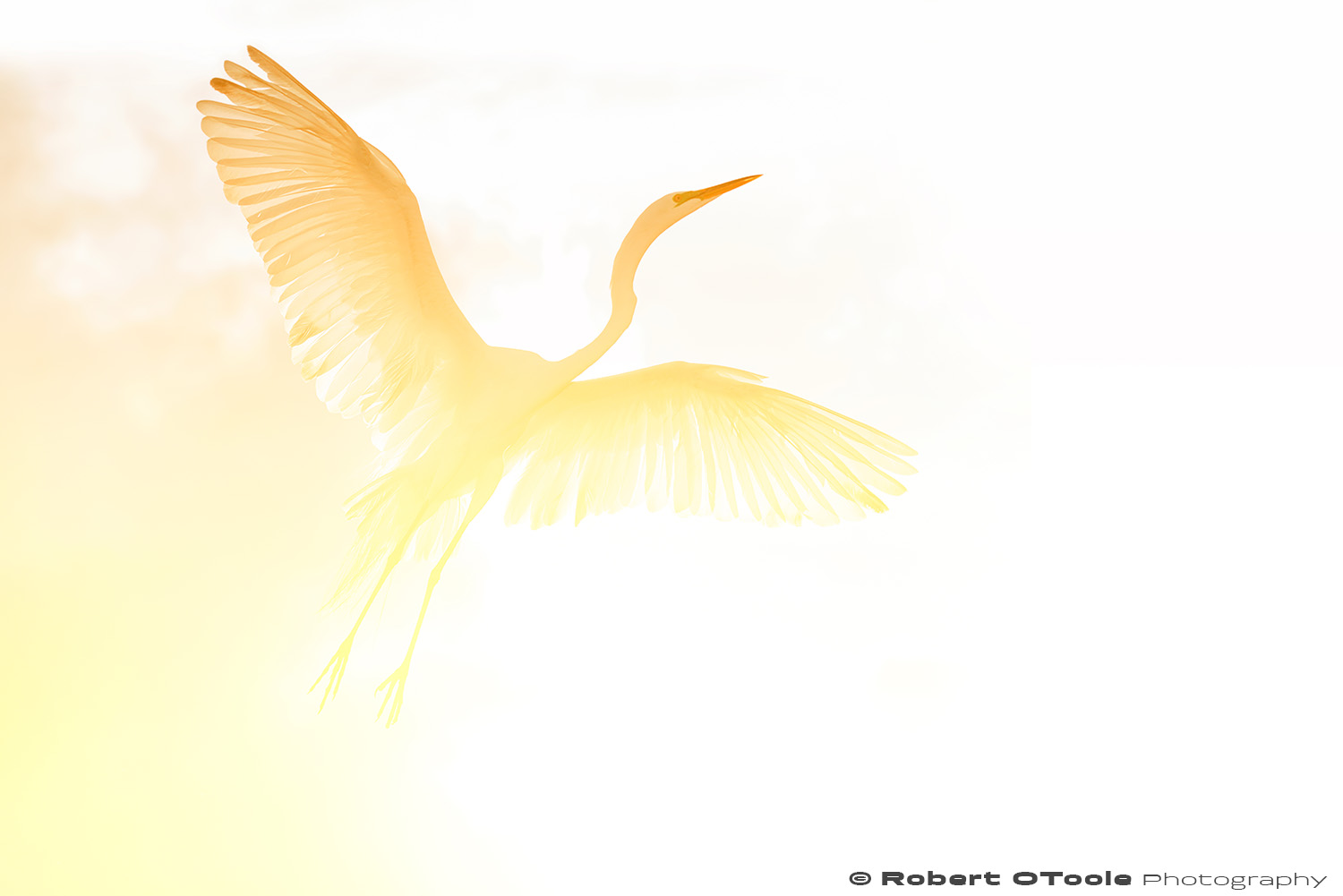 Great egret and a glowing sunset Sigma 120-300 S @120mm Nikon D810 1/1250 f/5.6 ISO 400 manual mode SB800 flash