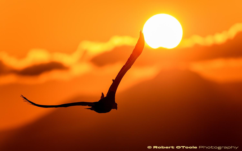Steller-Sunrise-Rausu-Japan-2018-Robert-OToole-Photography.jpg