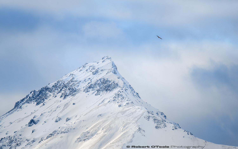 Eagle peak. Nikon D850 with Sigma 150-600 Sports lens at 600mm 1/800th sec at f/8 ISO 400 handheld and manual mode.