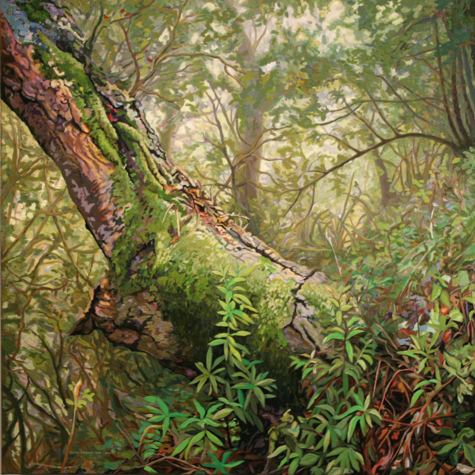 Djerassi Oak, 2005