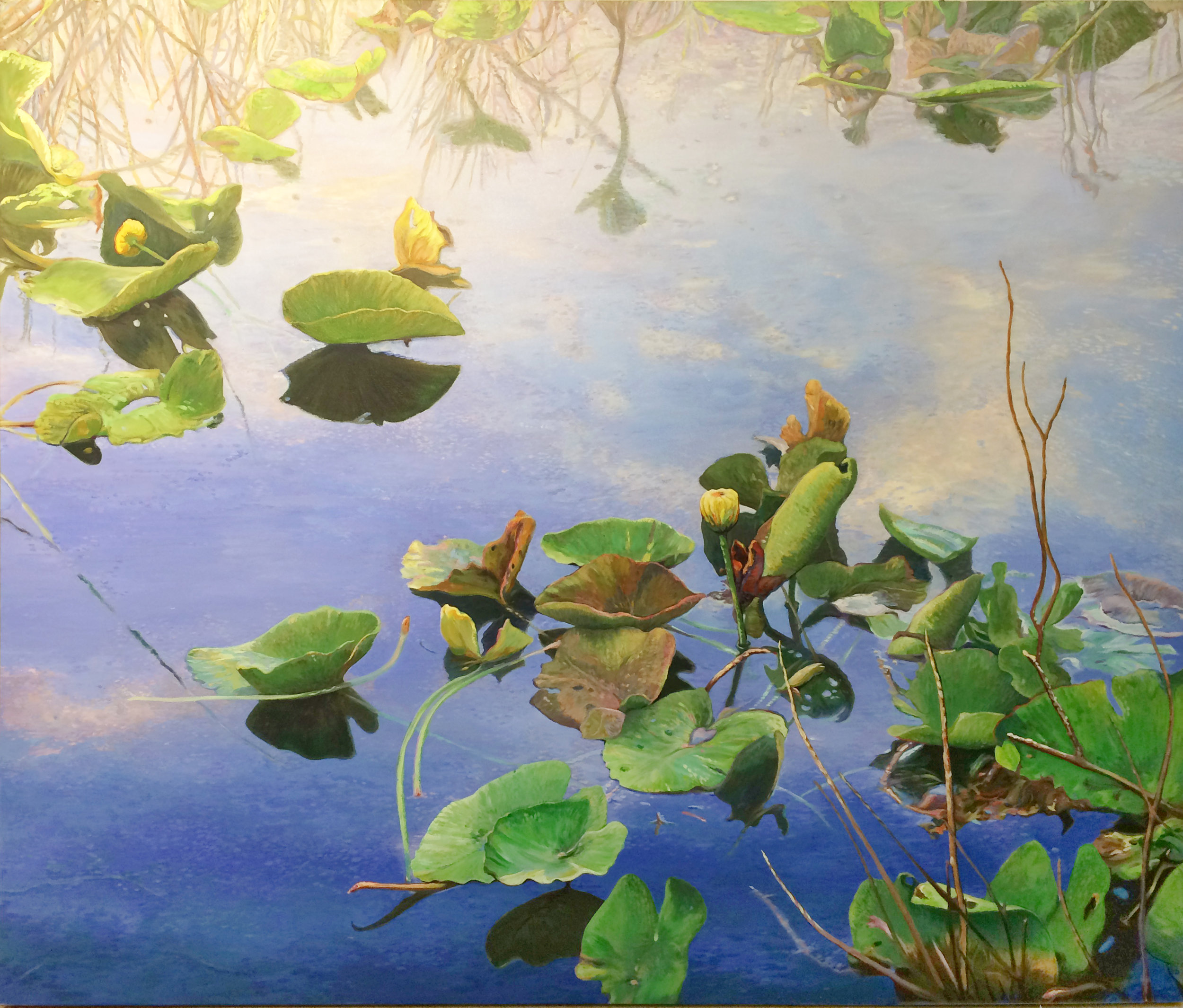 Water Lily, 2015