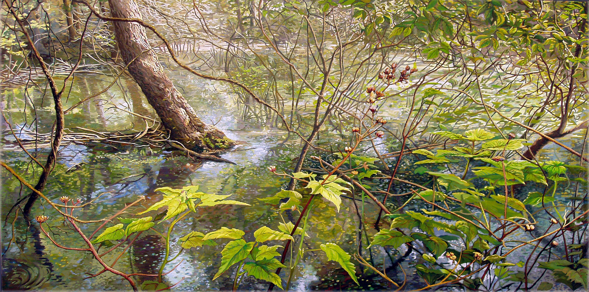 Dragonfly Swamp, 2004