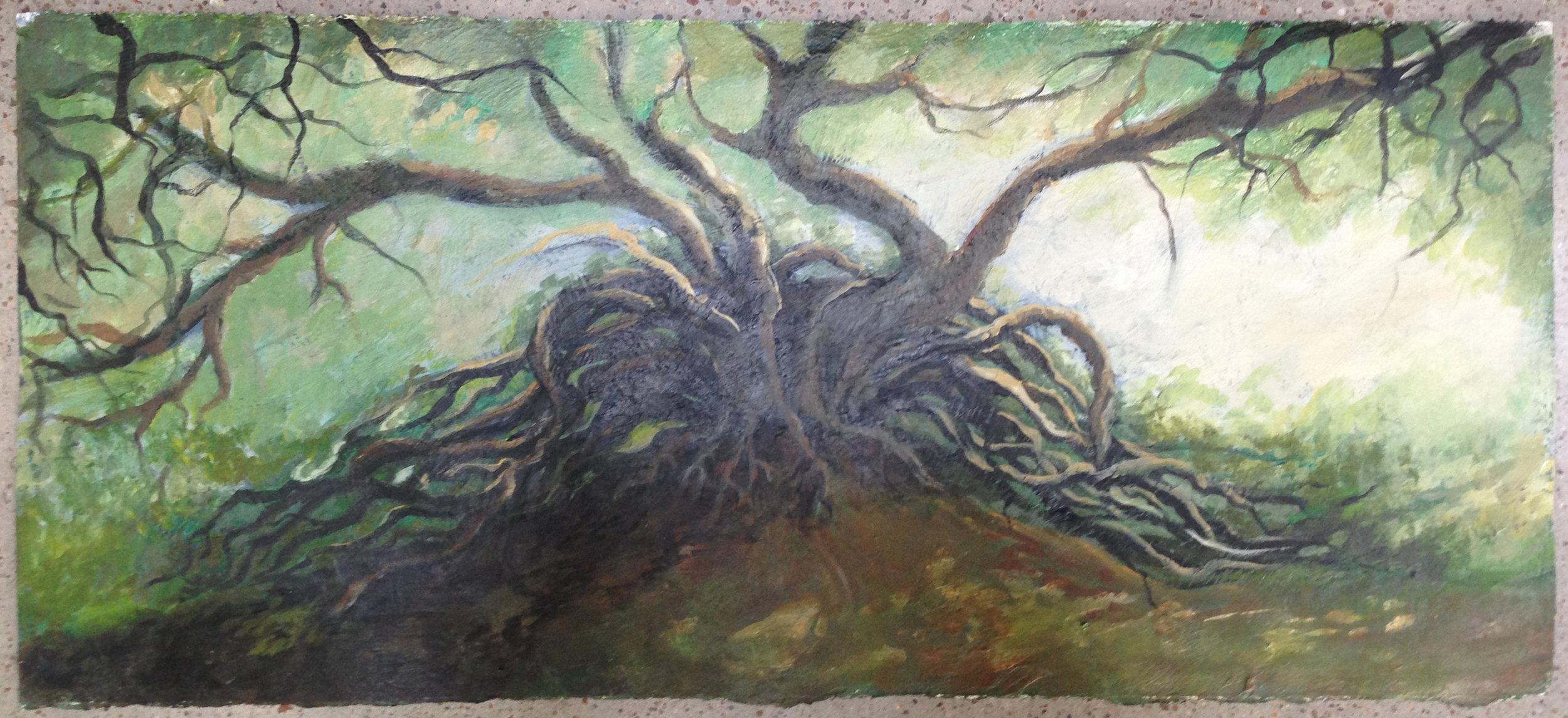 Tree Yew, 2006