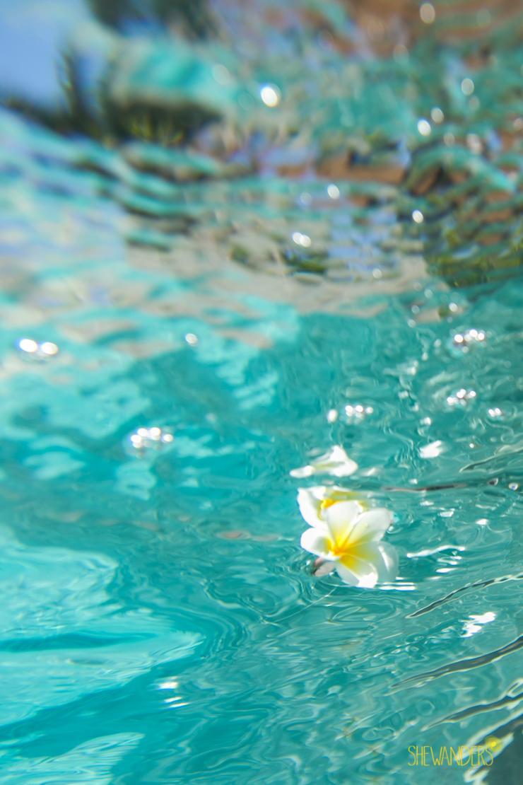 ShewandersPhotographySanDiegoWeddingPhotographyWaterLightReflectionFloatingFlower.jpg