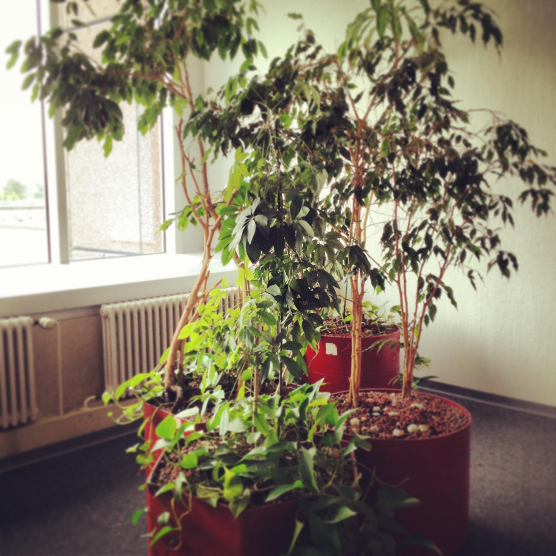 office-tree