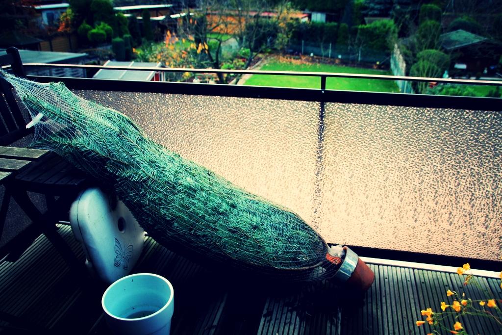 Baum-Balkon.jpg