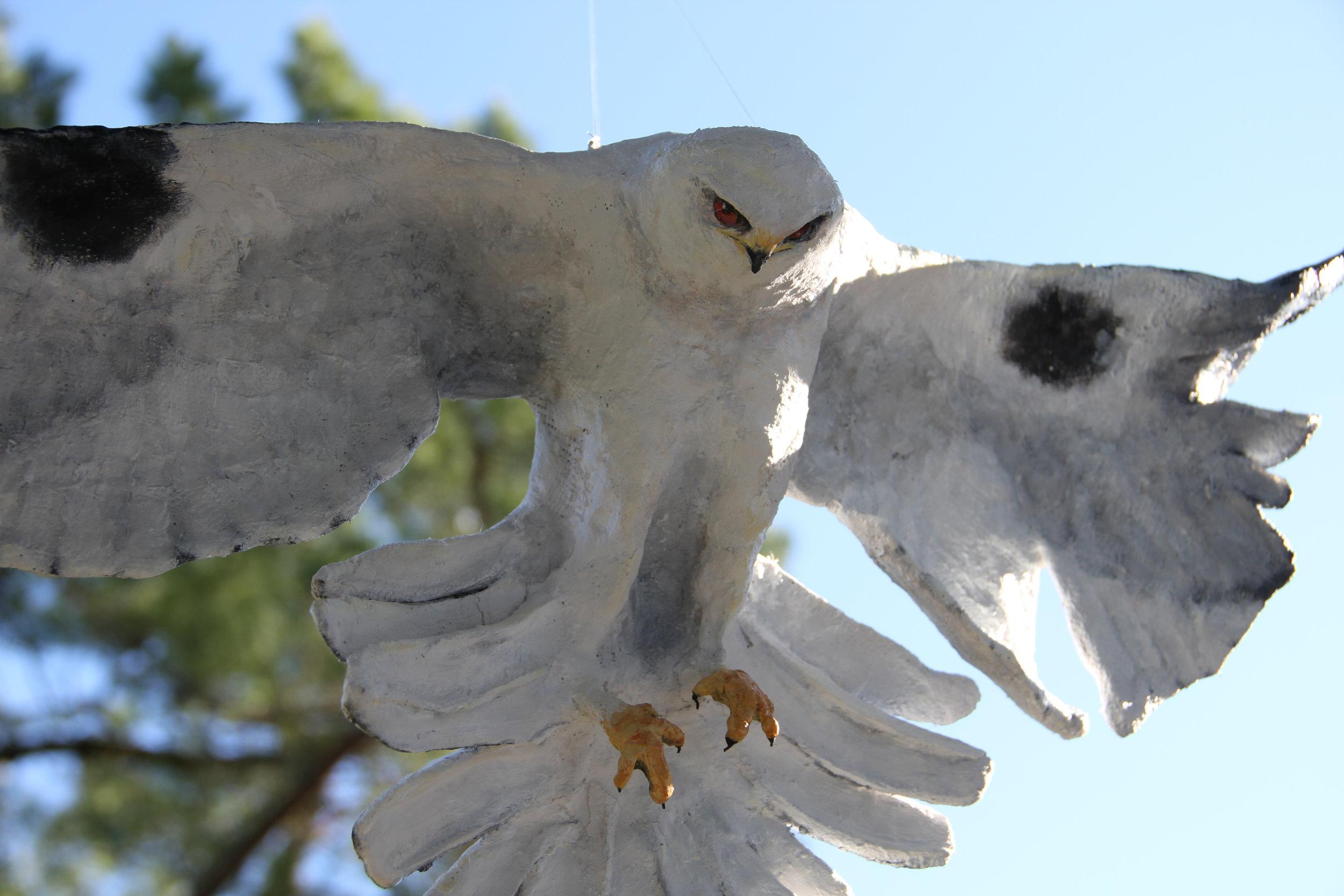 White Tailed Kite - SOLD