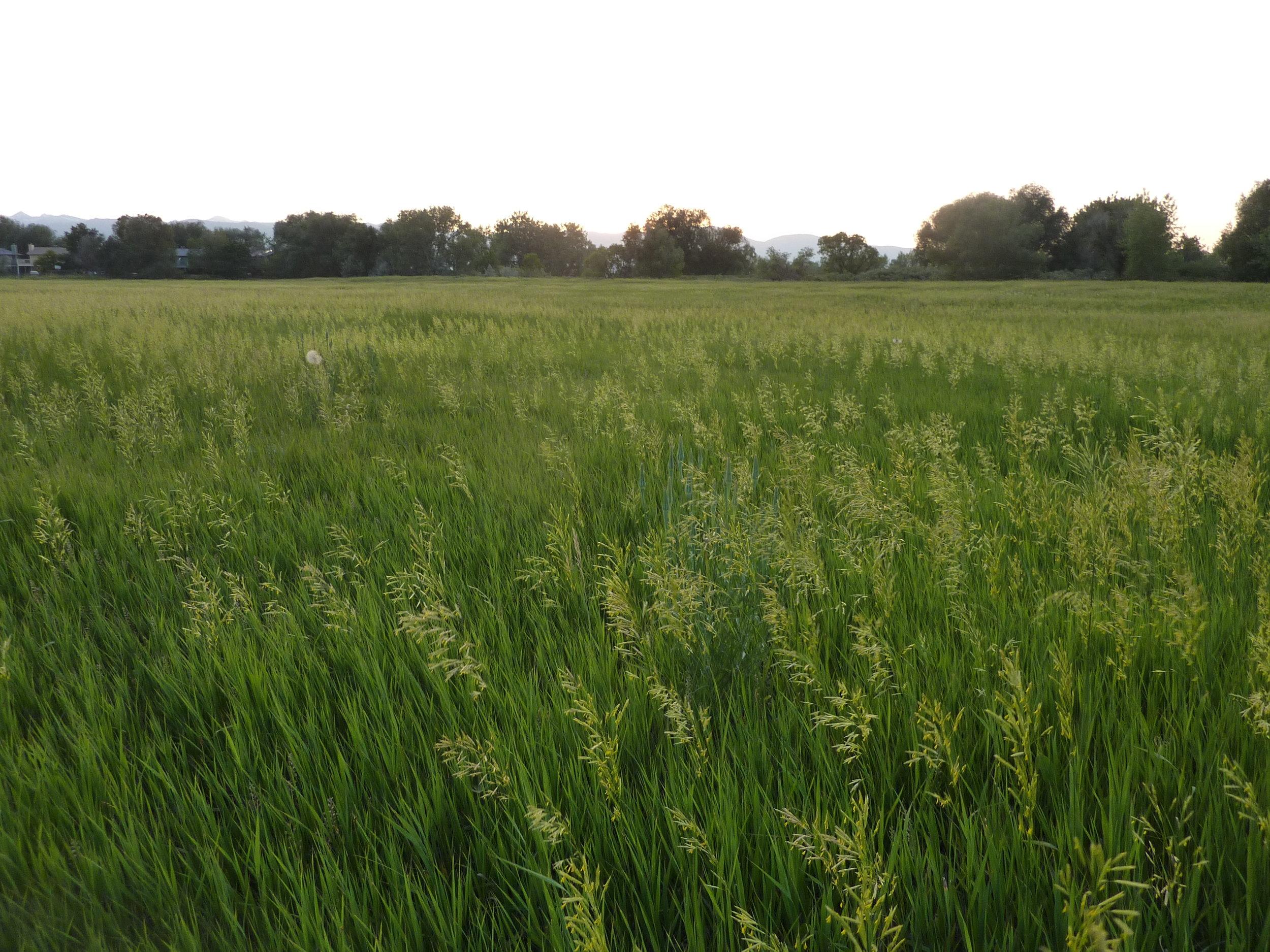 TwinLakes_USDA-Prime_Farmland