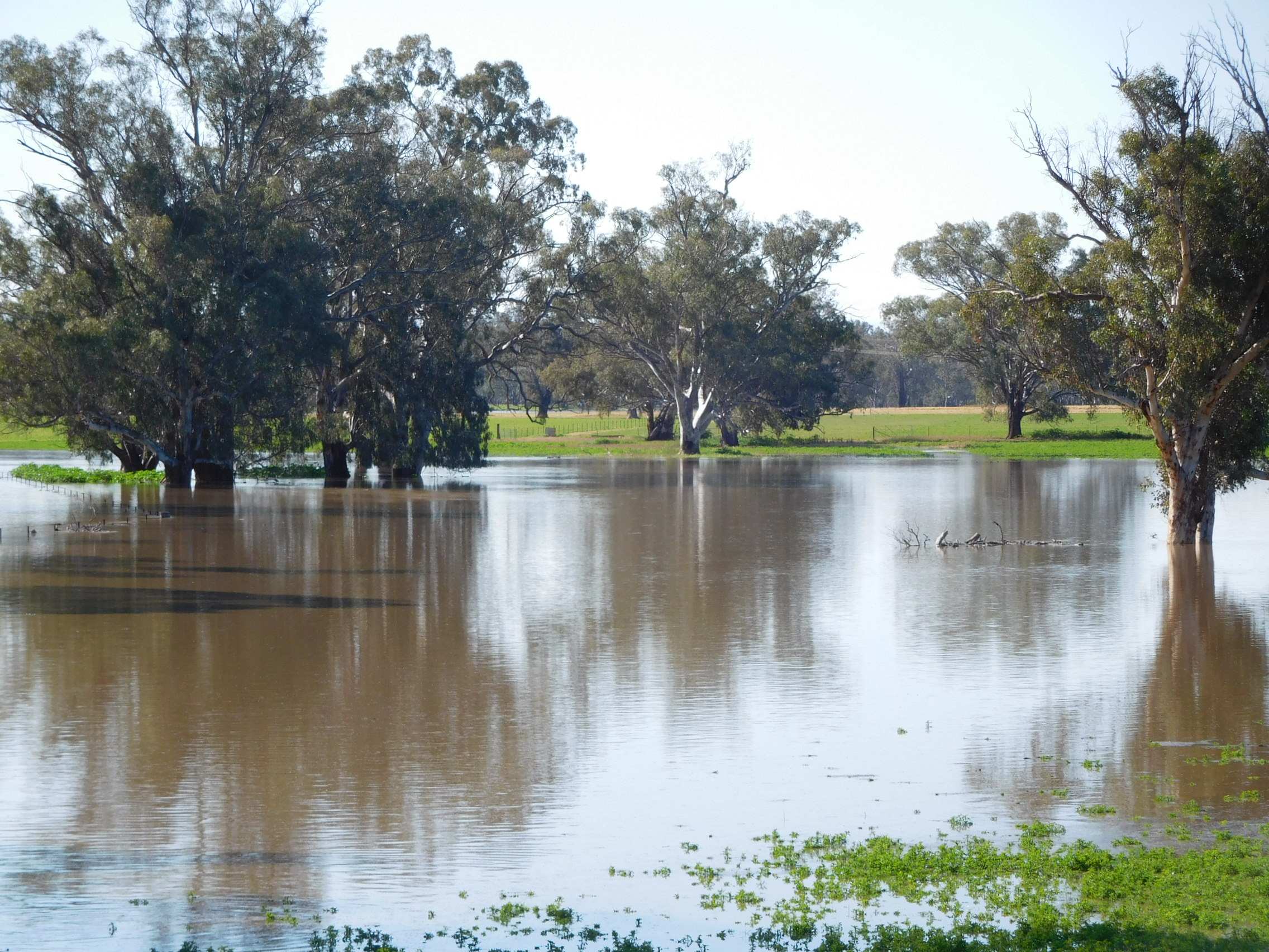 Floodwaters near Forbes