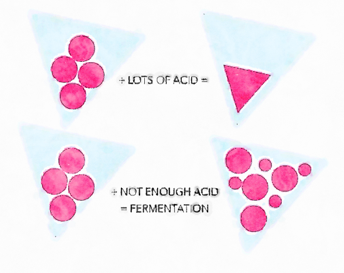 One way your four fecta can go wrong is by not producting enough stomach acid. if your stomach isn't acidic enough, food can literally ferment inside and cause serious bloating within 1-2 hours of eating.
