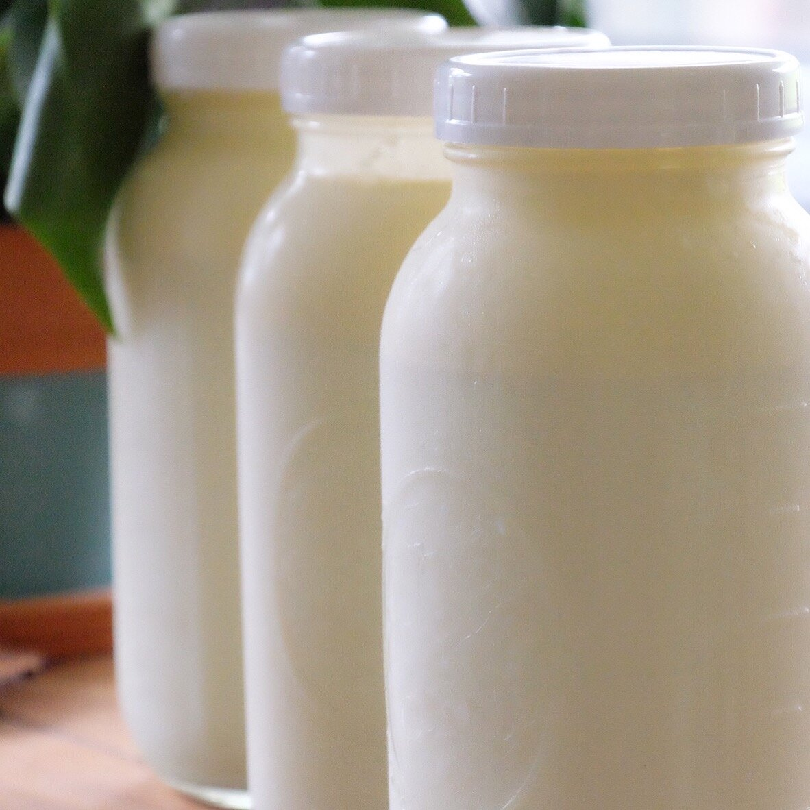 1 1/2 gallons of raw milk from my cow share! after 2 years dairy free, i discovered raw milk as an exceptional tool in my healing process, and still to this day drink 2 gallons a week all by myself.