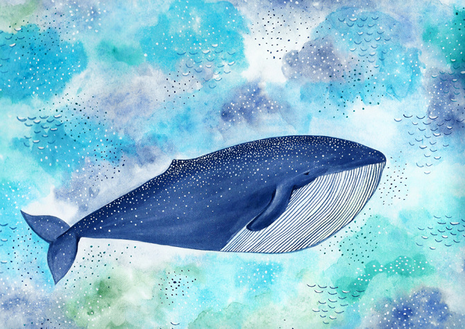 wholewhale_lo-res.jpg