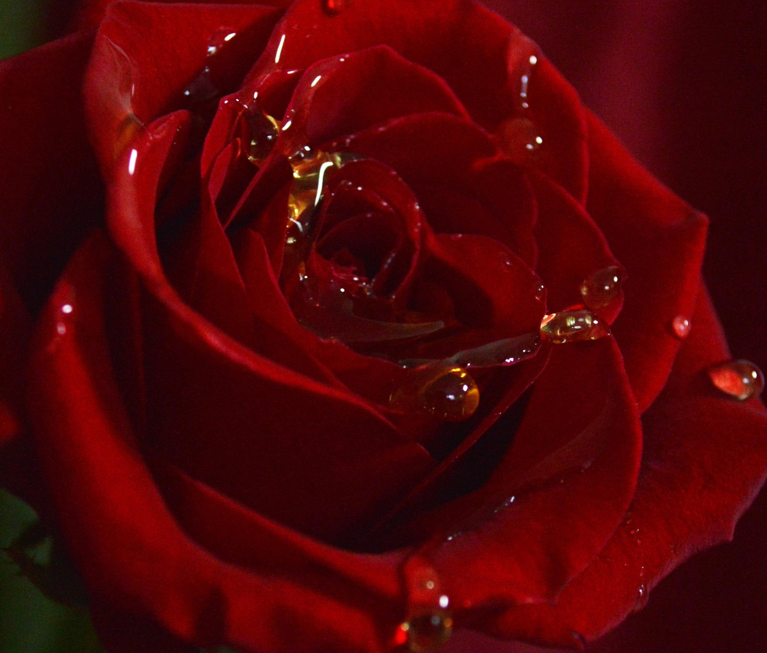 rose and honey.jpg