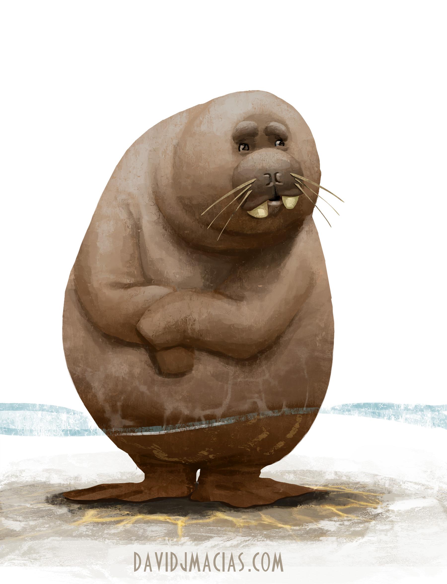 walrus_web.jpg