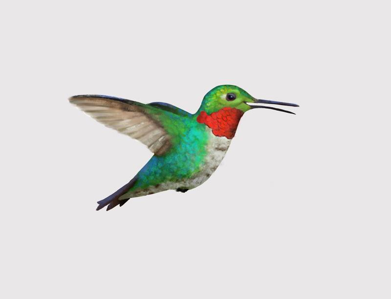 Hummingbirds-009.jpg