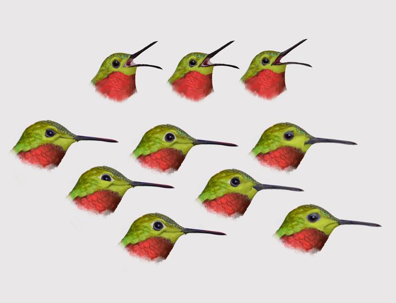 Hummingbirds-003.jpg