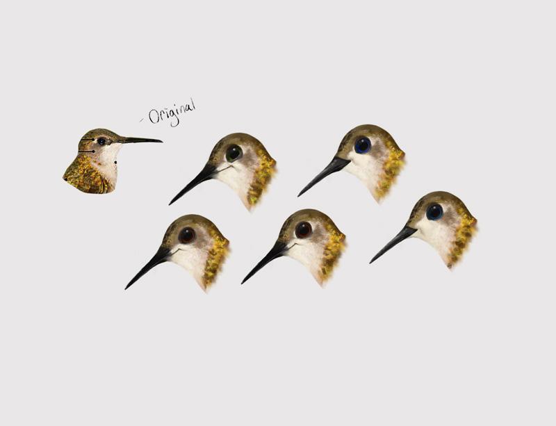 Hummingbirds-004.jpg