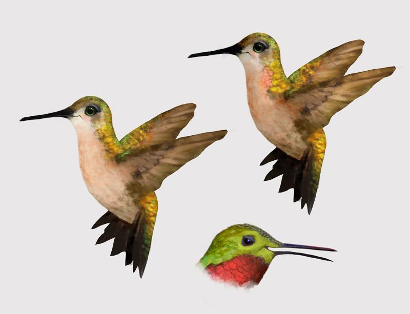 Hummingbirds-006.jpg